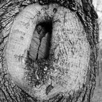 Holz-Porn