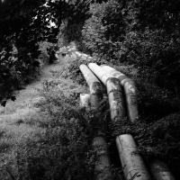 Wald-Leitung